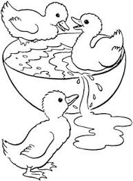 Duck Swimming In A Bowl Coloring Pages
