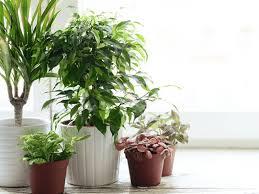 7 robuste zimmerpflanzen die wenig pflege brauchen