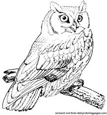 Texas Screech Owl Bird Coloring Pages