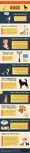 Dogs That Dont Shed And Smell by Best 25 Facts About Puppies Ideas On Pinterest K9 Dog Training