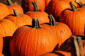 Wisconsin Pumpkin Patches 2015 by Milwaukee Pumpkin Patches And Apple Orchards