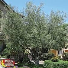 Olive Garden Riverside