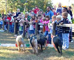 Motley Pumpkin Patch by Live Pig Races And Family Fun At Motley U0027s Pumpkin Patch And