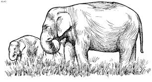 Free Coloring Pages Of Indian Elephant