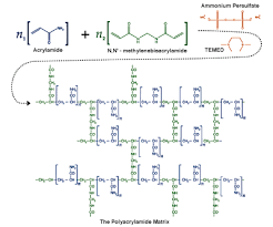 Polymerization Of Polyacrylamide With Methylenebisacrylamide