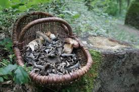 cuisiner des trompettes de la mort régaler avec des trompettes de la mort pratique fr