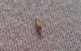 larven die meistgelesenen fragen
