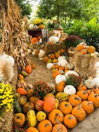 Mission Valley Pumpkin Patch by Fall Guide Pumpkin Patches Oklahoma Gazette