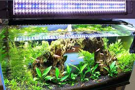 plant aquarium light spec v aquarium with planted led light