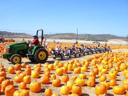 Pumpkin Patch Jefferson Blvd Culver City by Los Angeles Events 23 Things To Do In La For Halloween