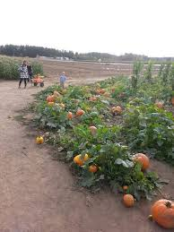 Pumpkin Patch Medford Oregon by 749 Best Oregon God U0027s Country Images On Pinterest Beautiful