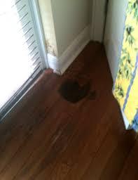 hardwood floor water damage saving flooring preventing mold