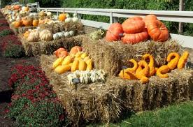 Varieties Of Pumpkins by Picking The Right Pumpkin From The Patch Msu Extension