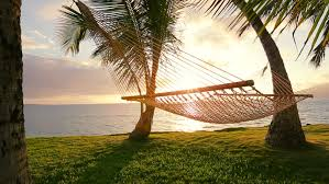 Hammock And Palm Trees At Sunset Hammock Swinging The Wind