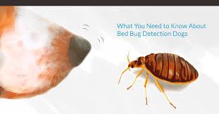 keep bed bugs v3