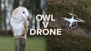 Barn Owl Vs. DJI Drone: Which Is The Ultimate Flyer? Tasmian Masked Owl Wikipedia Sylvierland Moments And Thoughts Owl In Front Of The Farmer Writes Threats To Barn 13 October 2015 Free Barn New Zealand Birds Online Tyto Alba Species Owls Have Nesting Bonanza Region Npareilonlinecom How Find Photograph Owls Bird Photography Audubon Ms De 25 Ideas Increbles Sobre Sounds En Pinterest Kansas Citys Get All The Help They Need At Lakeside Nature Australia Australian Geographic Local Wildlife Landscape Our Local Voice