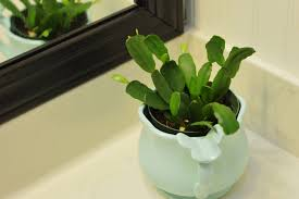 Best Plants For Bathroom Feng Shui by Bathroom Design Wonderful Good House Plants Uk Best Plants For