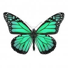 Papillons A Imprimer Gratuit T Ai