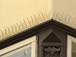 how to keep birds your roof