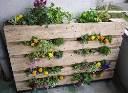 un potager en balcon avec culture de légumes