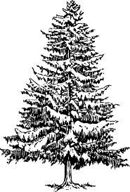 Christmas Tree Cutting Permits Colorado Springs by How To Draw A Christmas Tree Stencil 1 Free Printable