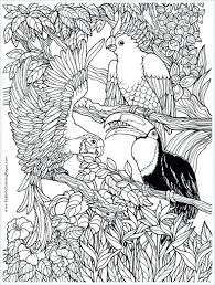 Coloring Pages Adults Print Color Free Parrots Bird Adult For Nature Disney Baby Full Size