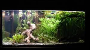 pompe a chaleur aquarium conseil achat mini pompe de brassage pour nano aquarium