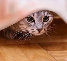 meine katze hat angst tipps für ängstliche katzen vs