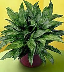 plante d駱olluante bureau plante dépolluante