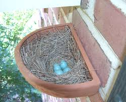 Sialis Picture Of The Week - Bluebird Nesting Outside A Cavity Bird Nest Idenfication Identify Nests How To Get Rid Of Swallows Best 25 Barn Swallow Ideas On Pinterest Pretty Birds Blue Bird Tree Have Returned From Migration To In Gourds Stained Glass Window March 2017 Cis Corner F June 2012 Nextdoor Nature Stparks Roosting For The Love Birds Easy Tips Attract Swifts And Martins True Life With God Hard Swallow Avian Explorer Blog Archive Babies Cottage Country Reflections Darou Farm Site Demolition Is Hold