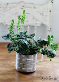 Repurposed Planters Measuring Cup