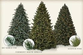 Silvertip Fir Christmas Tree by Traditional Vs Realistic Christmas Tree Balsam Hill