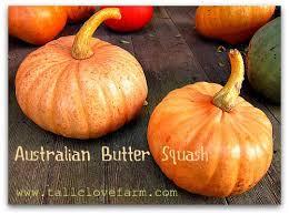 Cinderella Pumpkin Seeds Australia by Great Pumpkins Eye Candy And Great Eating Tall Clover Farm