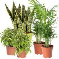 grünpflanzen schlafzimmer mix für halbschatten bis schatten aufrecht wachsend 6er set