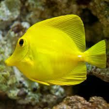Decorator Crabs Reef Safe by Live Saltwater Fish Corals Invertebrates U0026 Plants