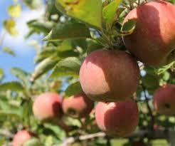 Pumpkin Picking Places In South Jersey by Best 25 Farms In Nj Ideas On Pinterest A Maze In Corn Corn