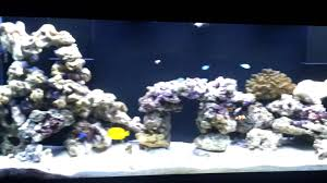 160 Gallon FOWLR Tank Setup 24 - Fish, Aquascape & Hardware Update ... How To Set Up An African Cichlid Tank Step By Guide Youtube Aquascaping The Art Of The Planted Aquarium 2013 Nano Pt1 Best 25 Ideas On Pinterest Httpwwwrebellcomimagesaquascaping 430 Best Freshwater Aqua Scape Images Aquascape Equipment Setup Ideas Cool Up 17 About Fish Process 4ft Cave Ridgeline Aquascape A Planted Tank Hidden Forest New Directly After Setting When Dreams Come True