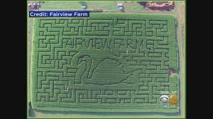 Pumpkin Picking Corn Maze Long Island Ny by Fairview Farm Corn Maze Youtube