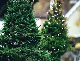 Best Real Christmas Tree Type Canada by Real Christmas Trees Vs Fake