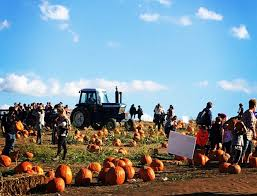 Pumpkin Patch Petting Zoo Illinois by 10 Pittsburgh Farm Festivals Where You Can Pick The Perfect