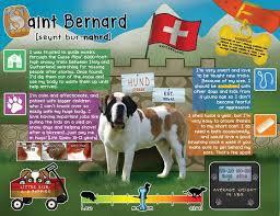Do Short Haired Saint Bernards Shed by Saint Bernard Facts Dogs Pinterest Saints Dog And Animal