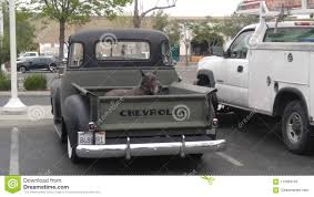100 Truck Dog Old Old Editorial Stock Photo Image Of Truck 115934783