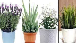 5 pflanzen die du in deinem schlafzimmer haben solltest um besser schlafen zu können