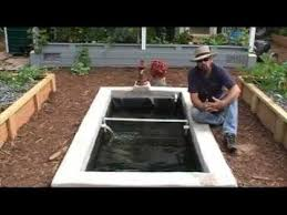 How We Add Freshwater Prawns Shrimp To Our Aquaponics System YouTube