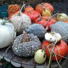 Natural Fertilizer For Pumpkins by Entries Tagged With