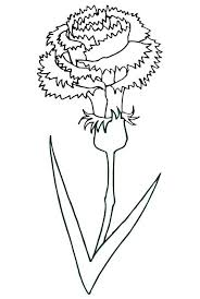 Blooming Carnation Flower Colouring Page