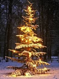 Christmas Tree Shop Falmouth Mass by 380 Best Christmas Tree Peace Images On Pinterest Peace Public
