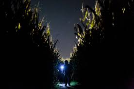 Jumbos Pumpkin Patch Map by Corn Mazes Help Farmers Make Ends Meet The New York Times