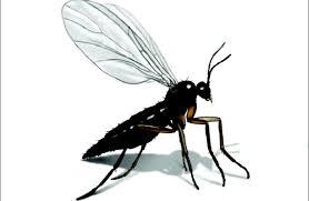 verschiedene insekten im badezimmer wie sie los wird