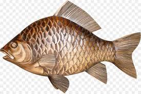 Fish Tilapia Clip Art
